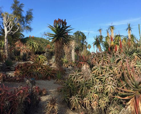 South African Aloe Collection