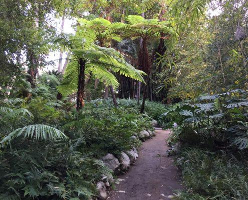 Fern Garden