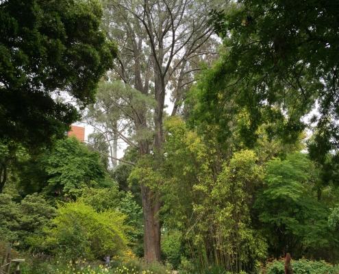 Botanical Garden 3