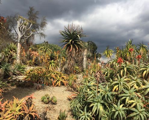 Desert Garden Storm