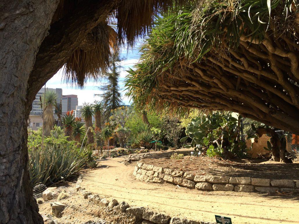 Desert Garden Mildred E Mathias Botanical Garden