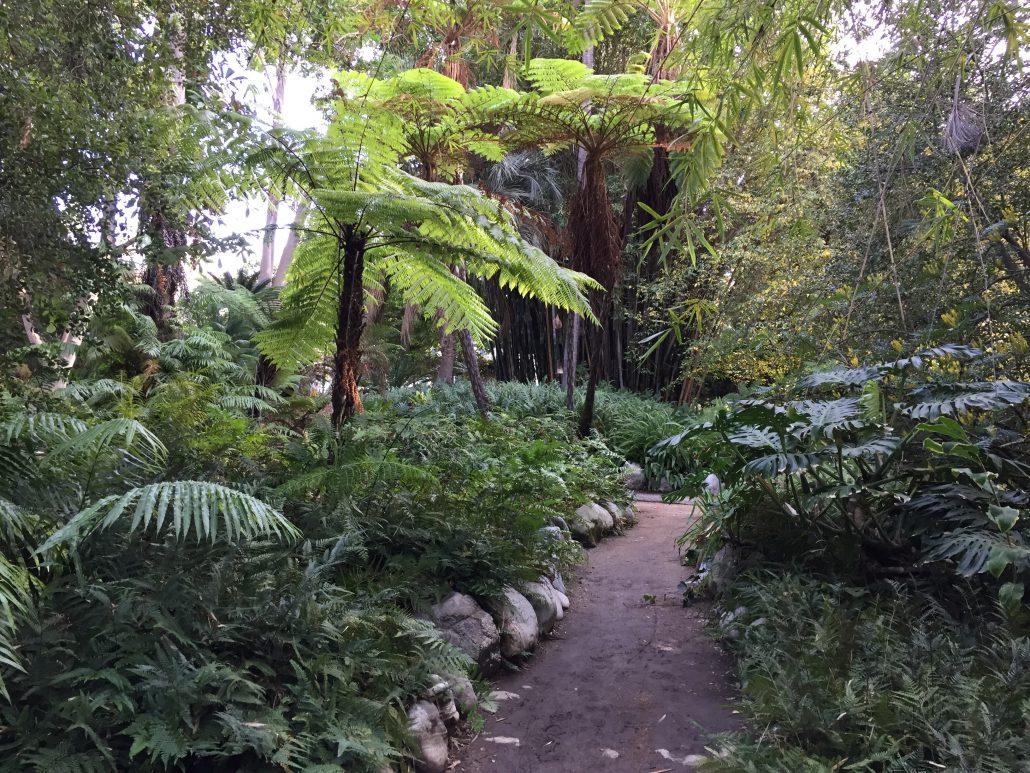 ... Salvinia Fern Garden Frond