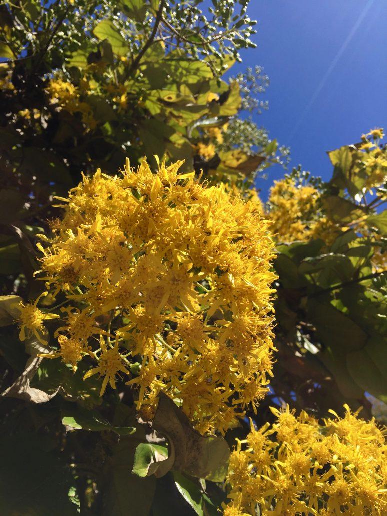 What\'s in Bloom – Mildred E. Mathias Botanical Garden