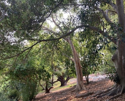 Subtropical Woodlands