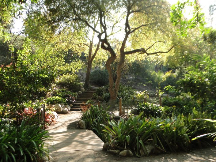 mildred e. mathias botanical garden |