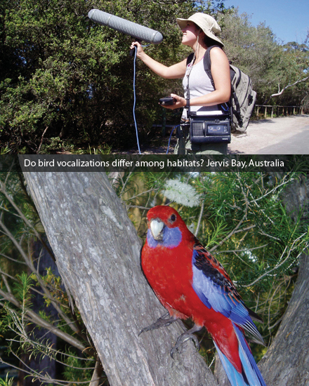 Do bird vocalizations differ among habitats? Jervis Bay, Australia