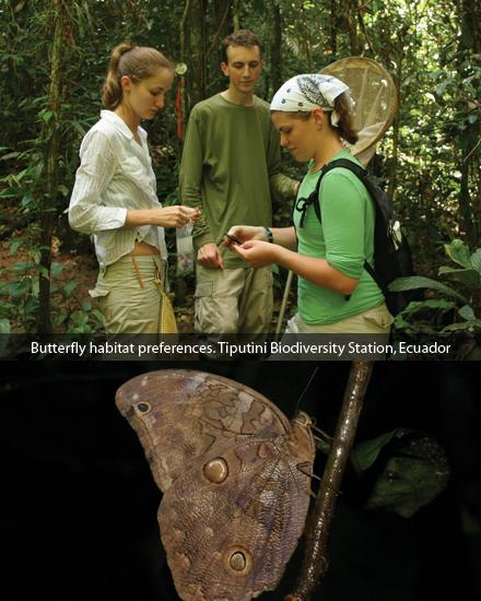 Butterfly habitat prefernces. Tiputini Biodiversity Station, Ecuador