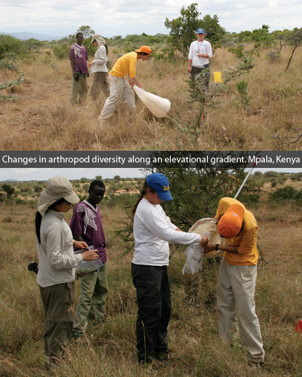 Changes in arthropod diversity along an elevational gradient. Mpala, Kenya
