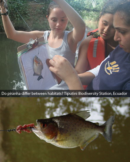 Do piranha differ between habitats? Tiputini Biodiversity Station, Ecuador