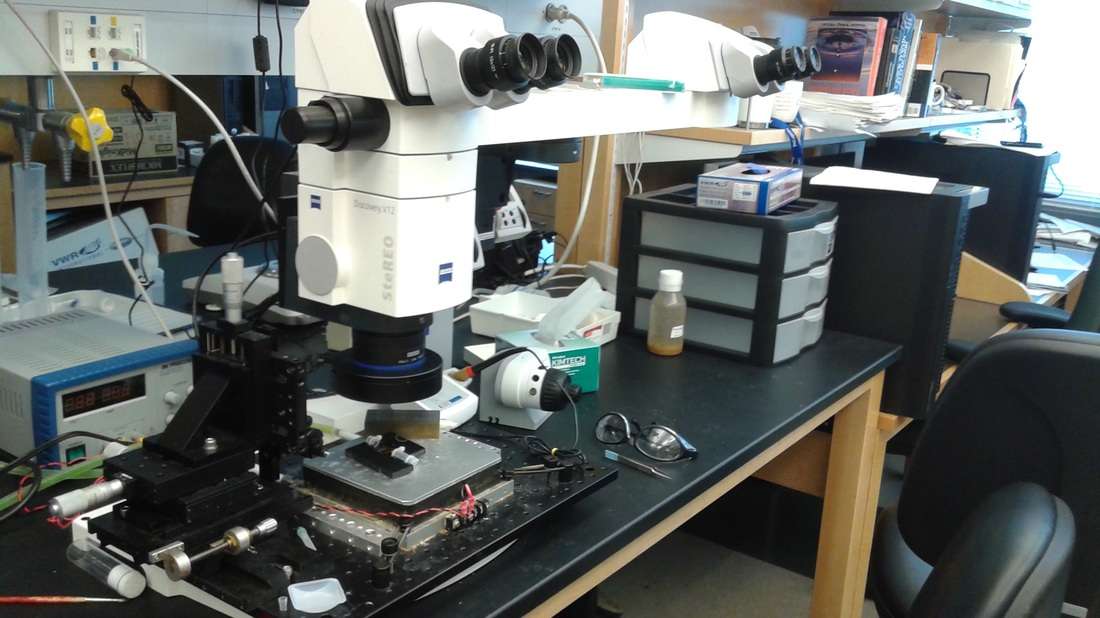 Lab bench with microscope